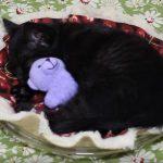 ぬいぐるみを抱きながら寝る黒猫さん(^◇^)