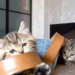 ジーンズで遊ぶ子猫ちゃん達にほっこり♪