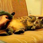 掃除機ですみずみまでキレイにお手入れされるネコさん