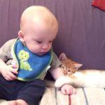 赤ちゃんの手を捕まえて離さない子ニャンコ