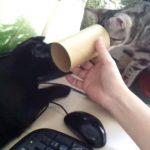 2匹のネコの間に筒を入れたら、お互い覗きこんで・・・