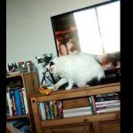 おもちゃを落とそうとする子猫ちゃんに「ダメよ~」と声をかけると・・・(*'▽')