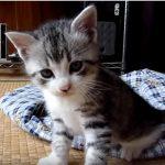 カメラを追跡する子猫ちゃん♡