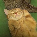 クネクネ動くシッポが気になって寝れないネコちゃん