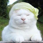 レタスのかつらが似合いすぎる猫ちゃん