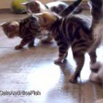 子猫のサッカー大会、最後は意外な結末を迎える・・・