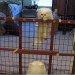 わが子が柵を登るのを見つめる親ネコ、成功したら優しく抱きしめる♡