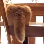 思わずさわりたくなる、フリフリしている猫の巨大なシッポ