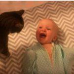 ネコを近づけると大喜びする赤ちゃん♡