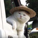 麦わら帽子がお似合いのネコちゃん