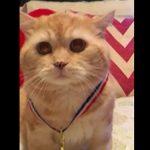 ニャリンピック、金メダル受賞に戸惑う猫ちゃん