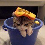 お風呂が大好きな子猫 (いい湯だな♪)