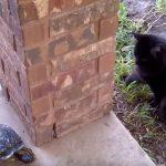 追いかけっこをして遊んでいるのは、ネコとカメさん