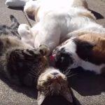 【ダブルへそ天】道ばたでジャレ合う猫ちゃんとワンちゃんにほっこり