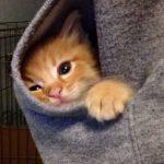 パーカーの中で温まる子猫ちゃん(*´▽`*)
