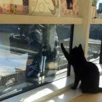 窓ふきのおじさんと再会する黒猫さん、窓ふきのお手伝いをする♪