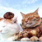 秋といえば「松茸」、のせ猫で季節を感じる