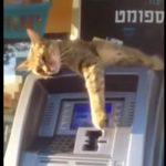 「振り込め詐欺から守るニャッ」ATMの番人なネコちゃん