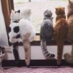 並んでお外を眺める5匹の猫ちゃんたちと、シッポを眺める猫さん