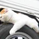タイヤの上で寝るネコさん