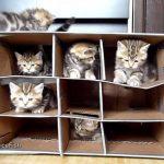 子ネコ専用マンション、ただいま入居者募集中♪