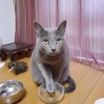 空いてるお皿に手をのせて、上目使いでおねだりする猫