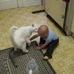 親代わり?赤ちゃんにピッタリついていって監視する猫ちゃん