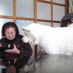 「・・・・・・・」接近して、無言の圧力をかけるカワイイ秋田犬♡