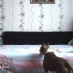 飼い主のお出かけ後、お留守番をする犬とネコを撮影したら・・・
