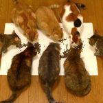 9匹のネコが力を合わせて文字を作る♪