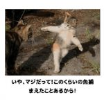 猫の画像でボケて!? 傑作選その1