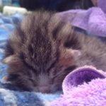 眠りながら「ニャァ、ニャァ」と泣く可愛すぎる子猫