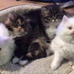 4匹の子猫ちゃん、みんな仲良くシンクロ(^◇^)