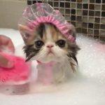 シャンプーハットをかぶり、泡風呂に入る姫猫さま