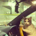 スピード出すぜ、しっかりシートベルトをしめるニャ 【猫画像】