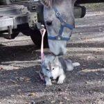 犬と仲良くなりたいお馬さんが健気で可愛い