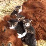 お馬さんの上で寝る子猫たちと、それを見つめるカピパラさん