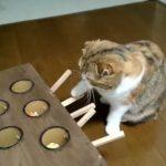 押すとおもちゃが飛び出る仕掛けに夢中になる猫さん