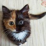 半分茶トラ、半分黒の神秘的な顔を持つ猫ちゃんが話題(^◇^)