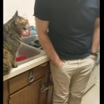 「ニャ~」、「にゃ~~?」猫語で会話する猫と人間