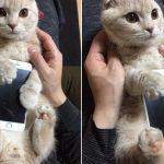 【猫画像】 猫型iphoneケースが新発売!?