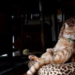 「あ・・ったかい・・ニャ・・」薪ストーブの前で優雅に眠る猫さん