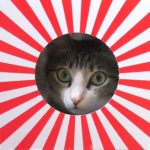 太陽になった猫ちゃん(^◇^)