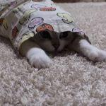 パジャマに隠れた猫ちゃんを釣ってみたら大成功♪
