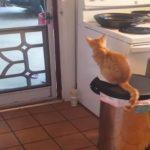 外に出たい猫ちゃん、スーパージャンプで脱出