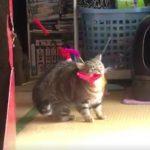 遊んでほしい猫ちゃん、豪快におもちゃを持ってくる(^◇^)