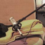 黒猫と人間のデュオグループの練習風景、見事なデュエット(*´▽`*)