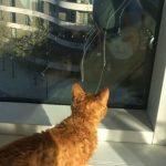 お茶目な窓ふき清掃員さんと遊ぶ猫ちゃん