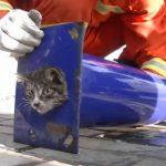 パイプの中で詰まってしまった猫ちゃん、懸命の救出で抜け出す