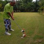 ゴルフの練習をするおじさんと遊ぶ猫ちゃん達にほっこり(^◇^)